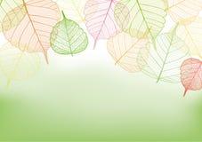 Kleurrijke bladeren met exemplaarruimte Stock Foto