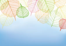 Kleurrijke bladeren met exemplaarruimte Royalty-vrije Stock Fotografie