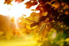 Kleurrijke bladeren met zonnestraal stock foto's