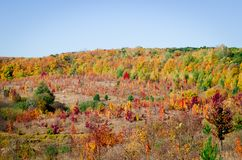 Kleurrijke bladeren op bomen in de herfstbos royalty-vrije stock afbeeldingen