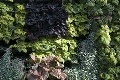 Kleurrijke bladeren op een installatiemuur royalty-vrije stock foto