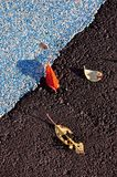 Kleurrijke bladeren op een sportenspoor stock afbeeldingen