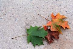 3 kleurrijke bladeren op het bodemrecht Stock Foto