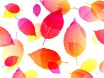 Kleurrijke bladeren op witte achtergrond royalty-vrije illustratie