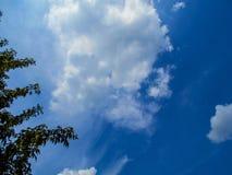 Kleurrijke bladeren tegen blauwe hemelachtergrond De luifel van bomen die een duidelijke blauwe hemel ontwerpen royalty-vrije stock afbeelding