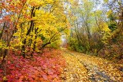 Kleurrijke bladeren van bomen in het de herfstbos, kleuren van blad-FA royalty-vrije stock fotografie