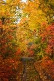 Kleurrijke bladeren van bomen in het de herfstbos, kleuren van blad-FA stock foto's