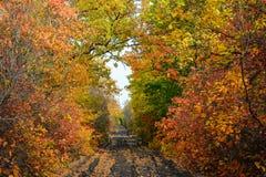 Kleurrijke bladeren van bomen in het de herfstbos, kleuren van blad-FA stock afbeeldingen
