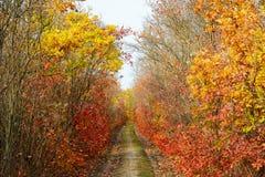Kleurrijke bladeren van bomen in het de herfstbos, kleuren van blad-FA royalty-vrije stock foto's