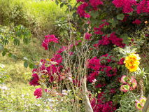 Kleurrijke bloeiende installaties Stock Afbeeldingen