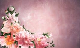 Kleurrijke bloeiende pioenen Stock Afbeeldingen