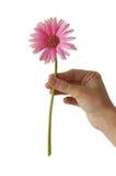 Kleurrijke bloem Stock Foto's