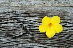 Kleurrijke bloem Royalty-vrije Stock Afbeeldingen
