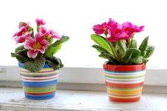 Kleurrijke bloem royalty-vrije stock fotografie