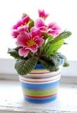 Kleurrijke bloem stock afbeeldingen