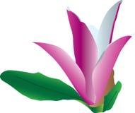 Kleurrijke bloem in bloei Vector Illustratie