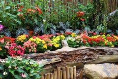 Kleurrijke bloem in de tuin Royalty-vrije Stock Fotografie