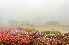 Kleurrijke bloem en houten brug in mooie tuin met regenmist Royalty-vrije Stock Afbeelding