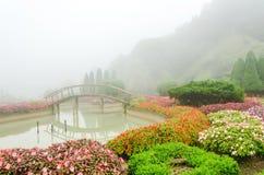 Kleurrijke bloem en houten brug in mooie tuin met regenmist Stock Foto's