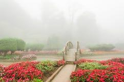Kleurrijke bloem en houten brug in mooie tuin met regenmist Stock Foto