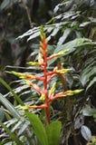 Kleurrijke bloem in het bos Stock Foto