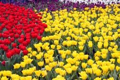 Kleurrijke bloem in rode geel en oranje Royalty-vrije Stock Fotografie