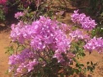 Kleurrijke bloem zeer dichte mening bij openbare tuin die mooi kijken Stock Afbeeldingen