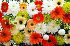 Kleurrijke bloemachtergrond Royalty-vrije Stock Afbeelding