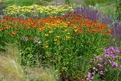 Kleurrijke bloembedden in de recente Lente, met inbegrip van bedden van coneflowers royalty-vrije stock fotografie