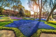 Kleurrijke bloembedden tijdens het jaarlijkse April-tulpenfestival in Istanboel in Gulhane-Park royalty-vrije stock foto