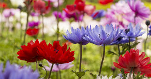 Kleurrijke Bloemen Royalty-vrije Stock Foto's