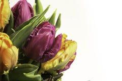 Kleurrijke bloemen stock foto's