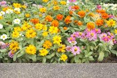 Kleurrijke bloemen. Royalty-vrije Stock Foto's