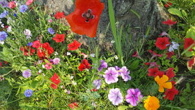 Kleurrijke Bloemen Stock Afbeelding