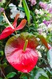 Kleurrijke bloemen bij Kew-Tuin, Londen Royalty-vrije Stock Foto's