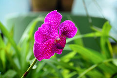Kleurrijke Bloemen bij Koninklijke Botanische Tuin Peradeniya, Sri Lanka Stock Fotografie