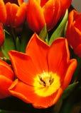 Kleurrijke bloemen in bloei Stock Afbeeldingen