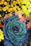 Kleurrijke bloemen in bloei Stock Afbeelding