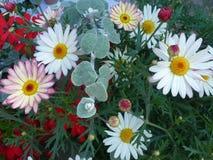 Kleurrijke bloemen in de lente Royalty-vrije Stock Foto's