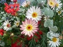 Kleurrijke bloemen in de lente Royalty-vrije Stock Afbeeldingen