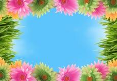 Kleurrijke bloemen de lentegrens royalty-vrije stock foto's