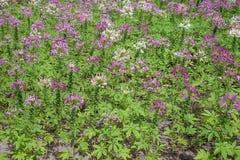 Kleurrijke bloemen in de mooie tuin Stock Afbeeldingen