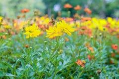Kleurrijke bloemen in de mooie tuin Royalty-vrije Stock Afbeelding