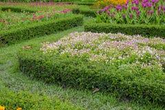 Kleurrijke bloemen in de mooie tuin Stock Fotografie