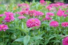 Kleurrijke bloemen in de mooie tuin Stock Foto