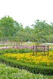 Kleurrijke bloemen in de mooie tuin Royalty-vrije Stock Foto's