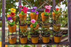 Kleurrijke bloemen in de potten van de muurbloem Stock Fotografie
