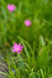 Kleurrijke bloemen in de tuin Stock Afbeelding
