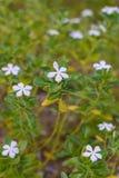 Kleurrijke bloemen in de tuin Royalty-vrije Stock Afbeeldingen