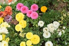 Kleurrijke Bloemen in de tuin Royalty-vrije Stock Fotografie